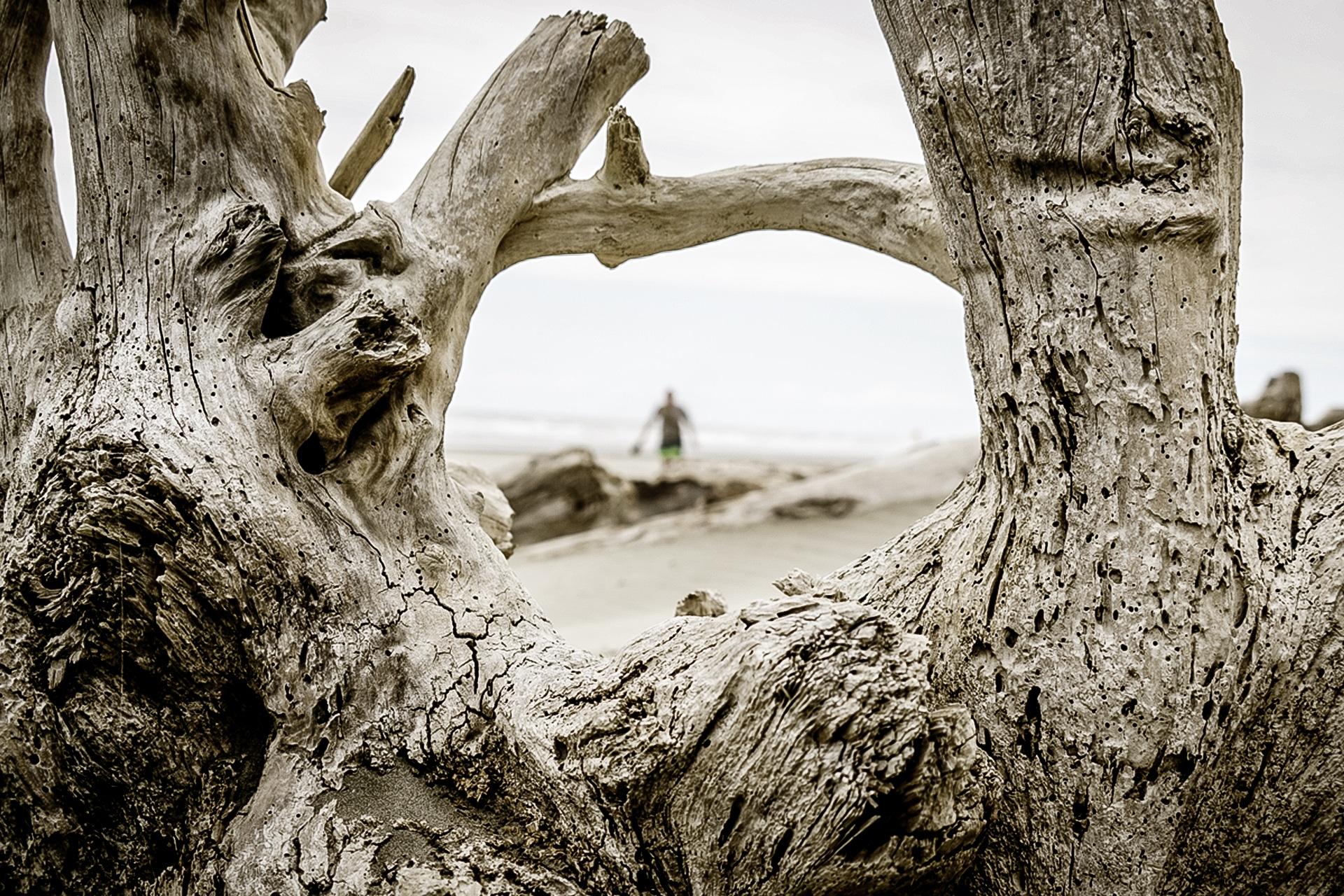 Fotografie - Treibholz am Strand von Neuseeland